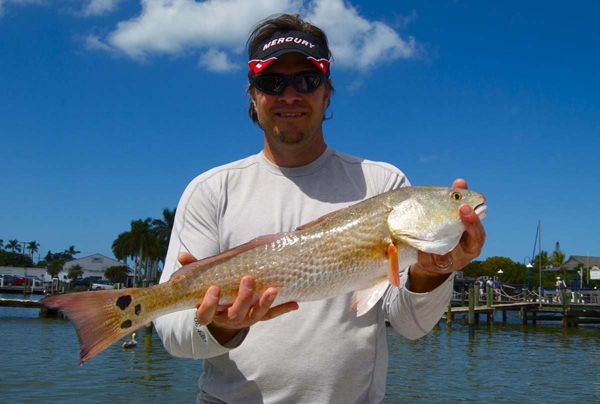 Everglades Redfish
