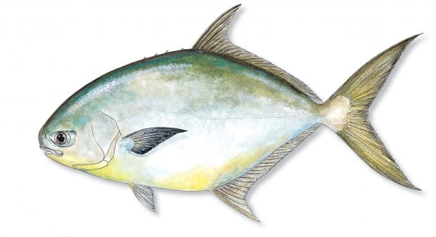 Naples Pompano Fishing Charters