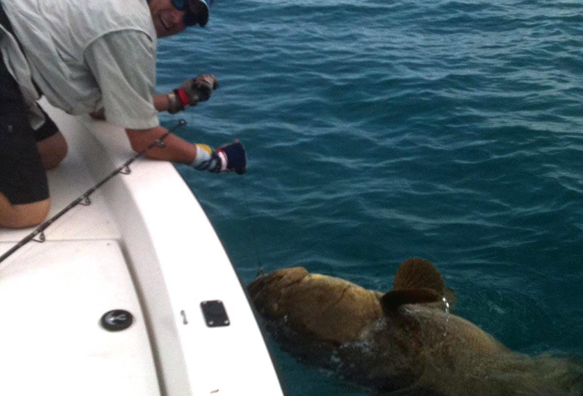 naples goliath grouper